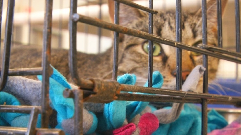 The sad facts of animal cruelty and what's being done to
